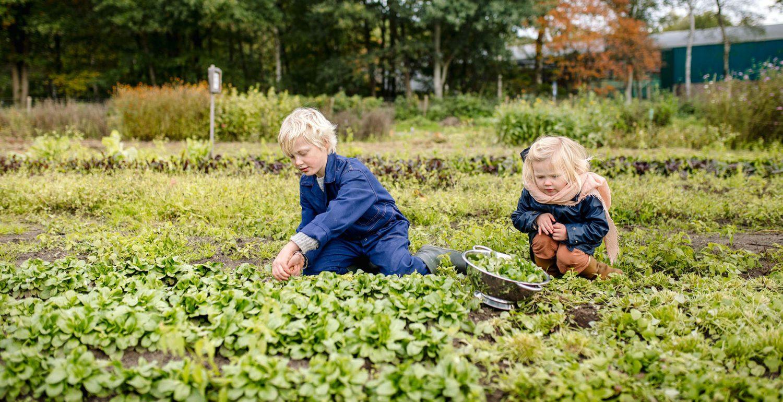 Aardpeer-Marleen Annema-websize-6030-crop